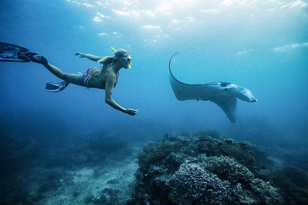 Swim with Manta Rays Bali Adventure