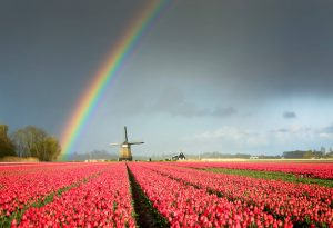 Best time to travel the Netherlands