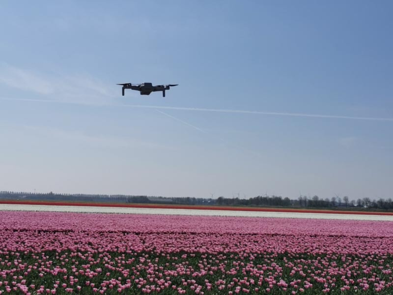 Drone flying above the tulip fields in the Netherlands