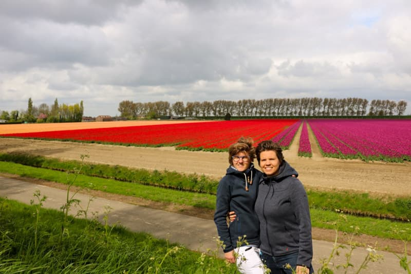 Discovering the tulips in Middelharnis