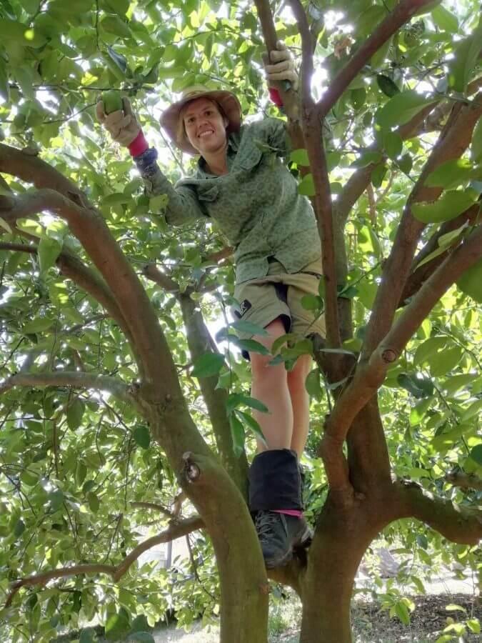 Work in Australia picking apples backpacker