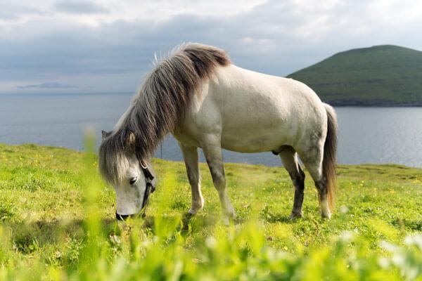 Horse Riding Faroe Islands