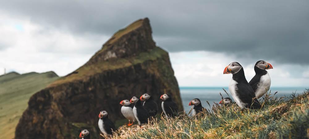 best time puffins faroe islands