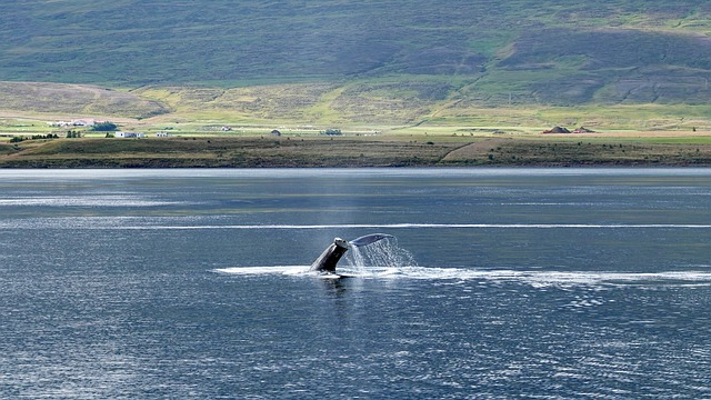 Whale Watching Faroe Islands Time