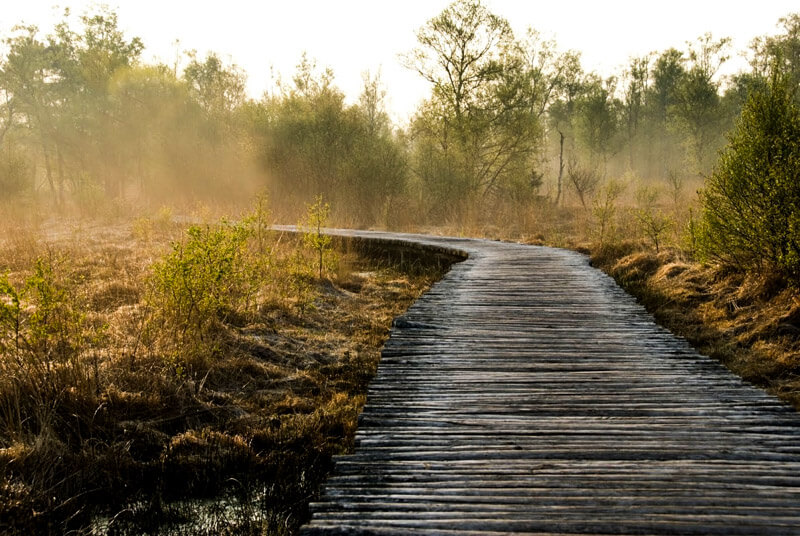 Groote Peel - National Park in the Netherlands