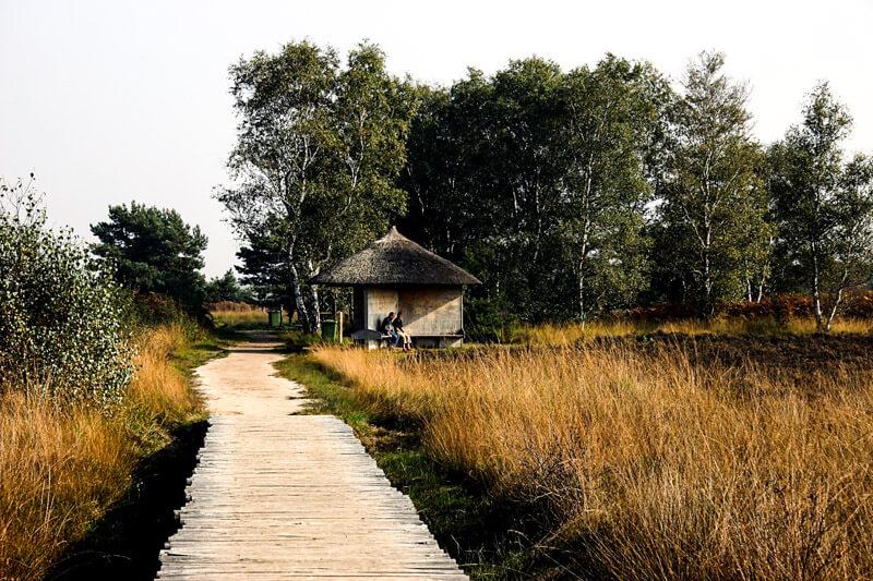 Walking path Groote Peel
