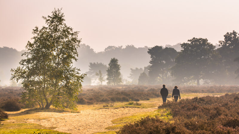 Hoge Veluwe - Netherlands National Park