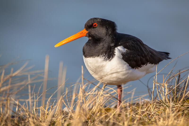 Wildlife in Lauwersmeer