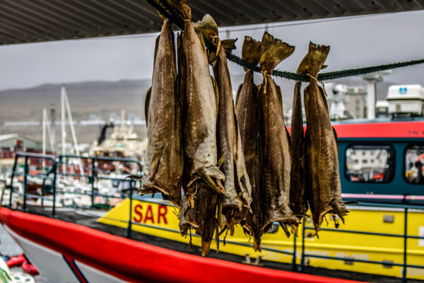 Faroe Islands Fish