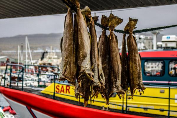 Faroe Islands Fish