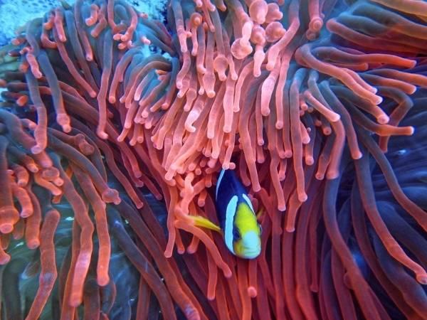 Animals Great Barrier Reef Australia