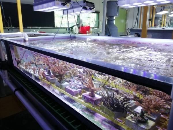 Australian Institute of Marine Science - Great Barrier Reef
