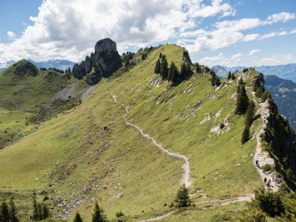 Faulhornweg: Schynige Platte - First