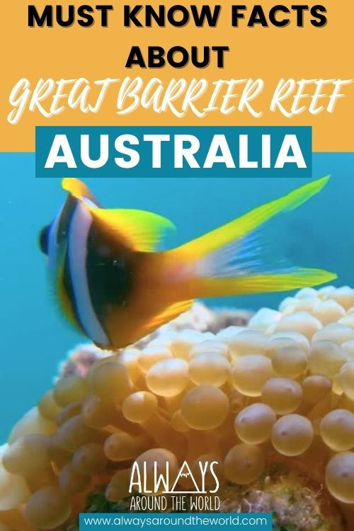 The Ultimate Great Barrier reef guide including maps, the history and everything you need to know. #australia #diving #snorkeling #greatbarrierreef