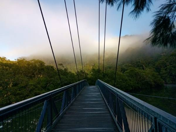 Rainforest NSW Hiking Australia