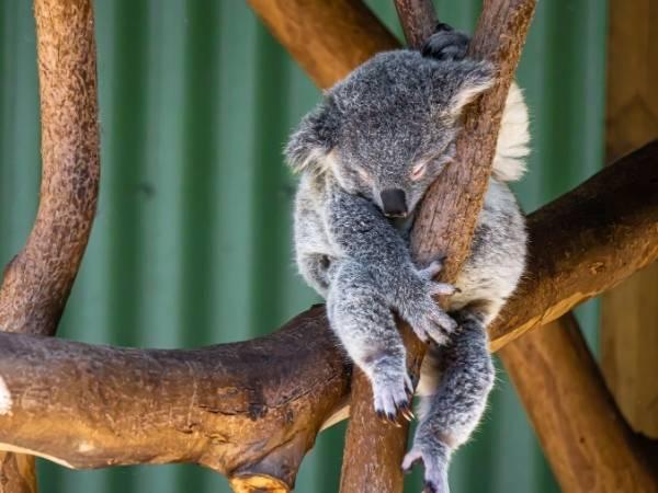 Australia Zoo - Cairns to Brisbane