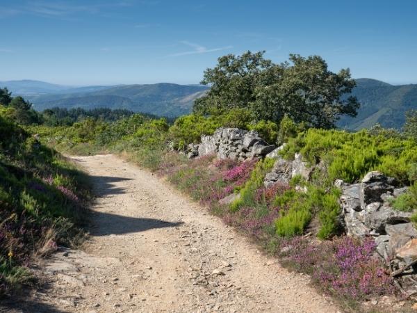 Camino de Santiago road