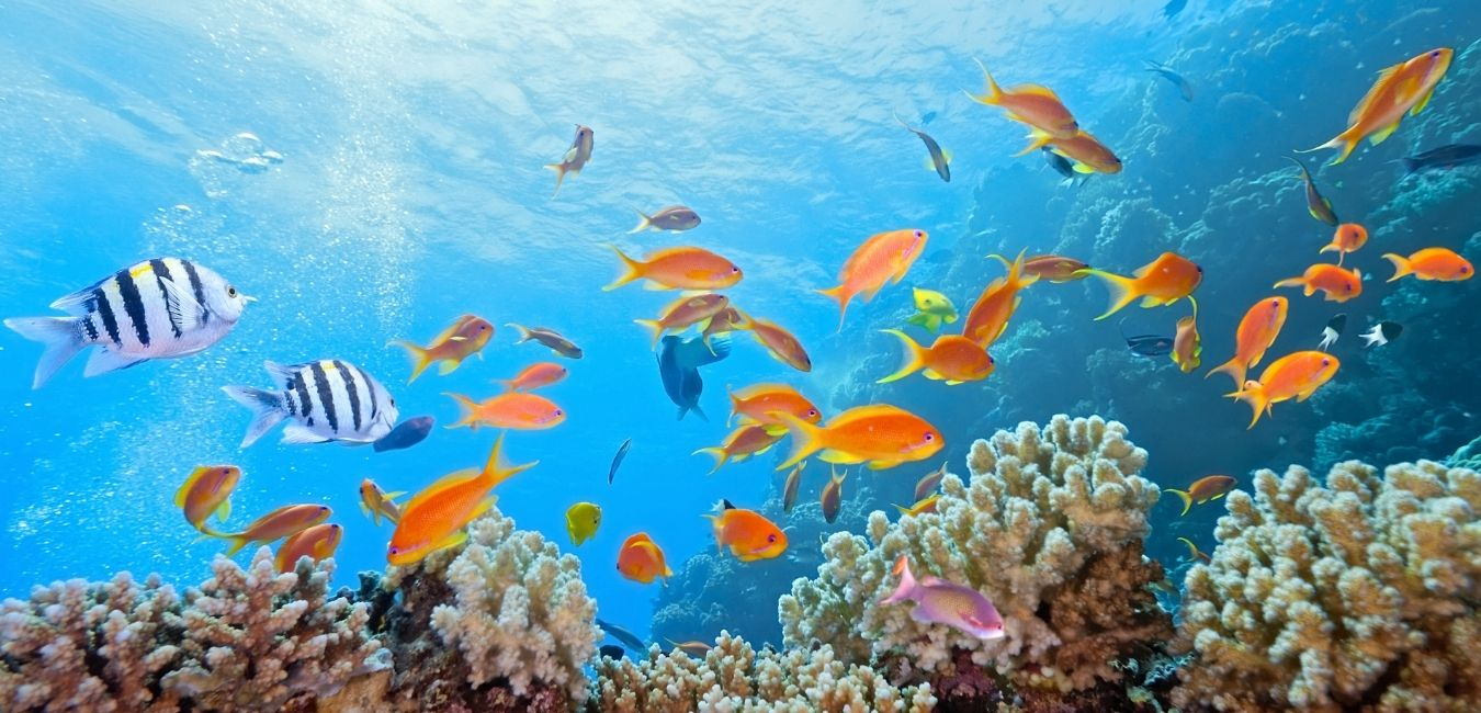 Great Barrier Reef Guide