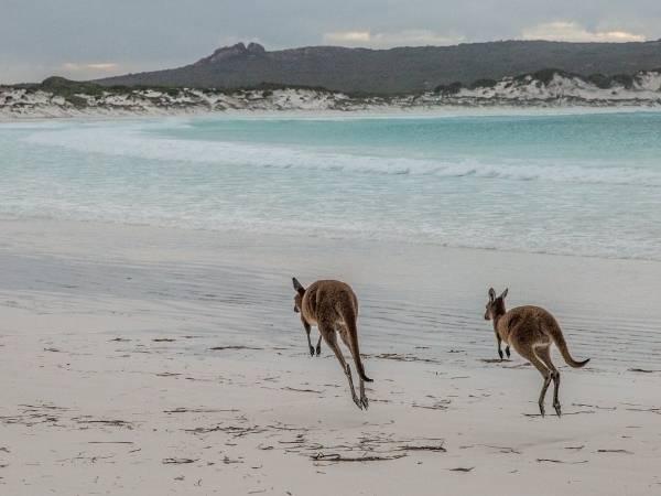Kangaroo Island - Hiking Australia