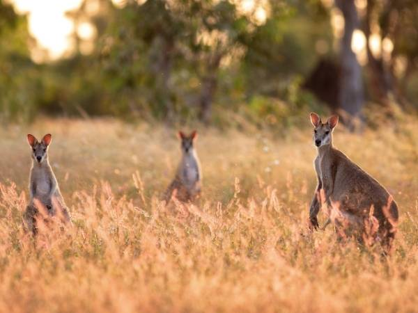 Northern Territory - Australia Hiking