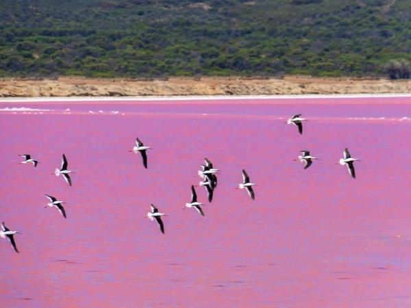 Pink lake - West Australia Hiking