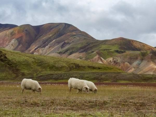 Skalli Landmannalaugar Hike Iceland