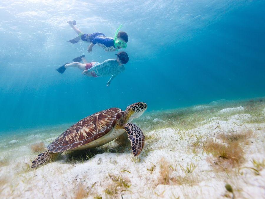 Snorkeling Turtles in Spain