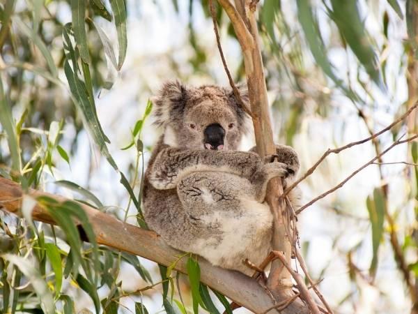 South Australia Hiking