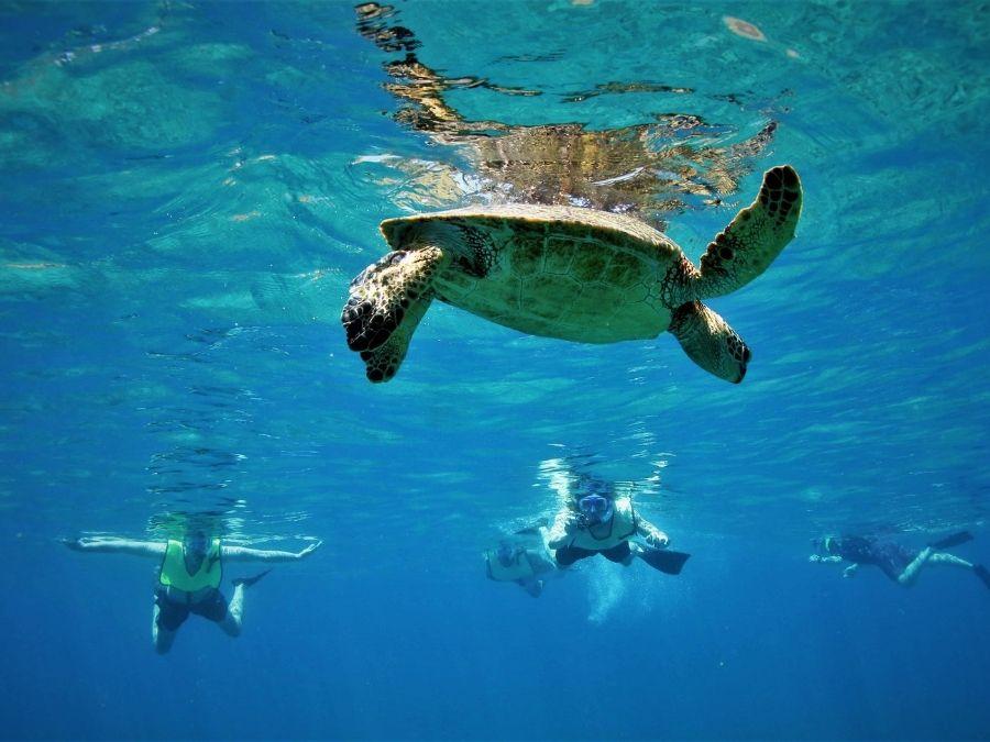 Turtles in Spain