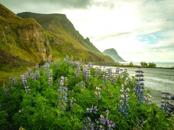 West Fjords - Hiking in Iceland