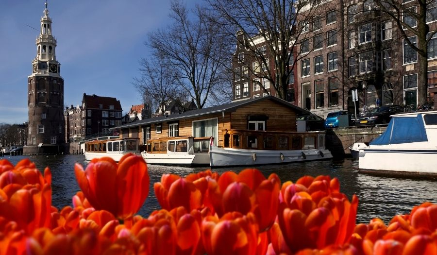 Amsterdam Tulips Netherlands