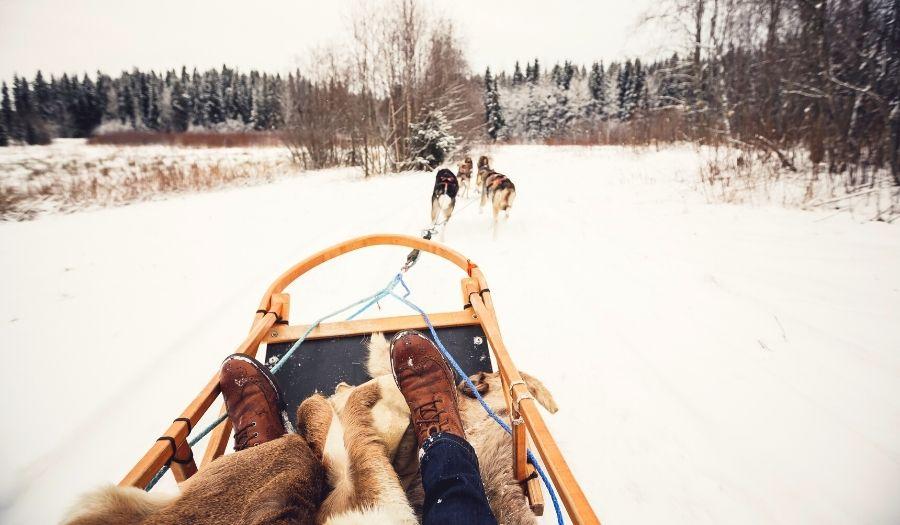 Dog Sledding Valentine Finland