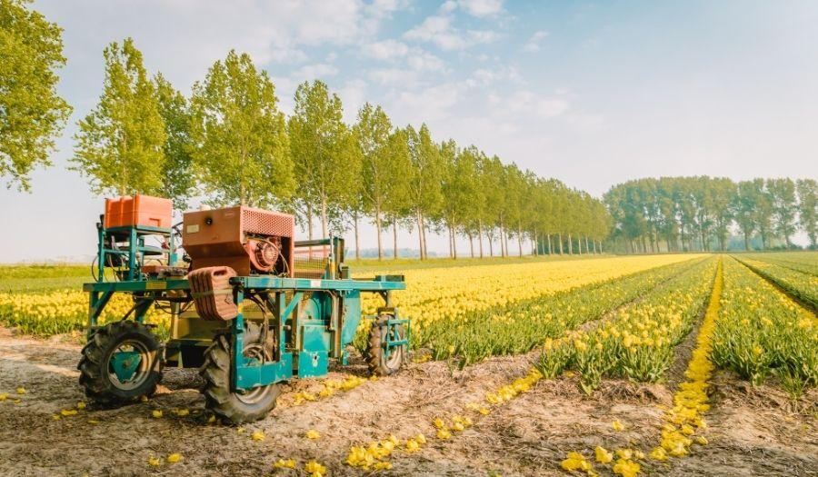 Farmer Tulip Fields