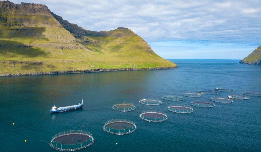 Faroe Islands Cuisine