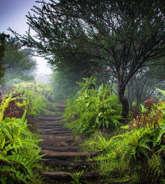 Garajonay National Park - La Gomera