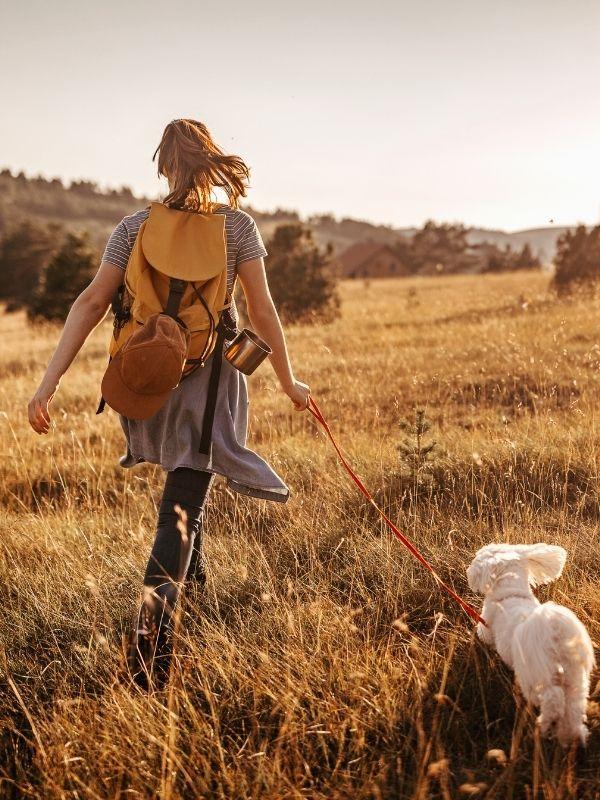 Hiking dog - Housesitting