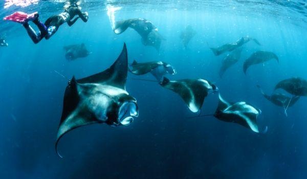 Manta Rays Bali Adventure