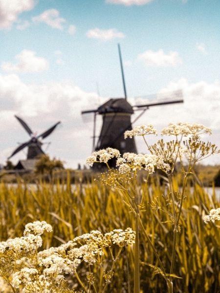 Mills Kinderdijk