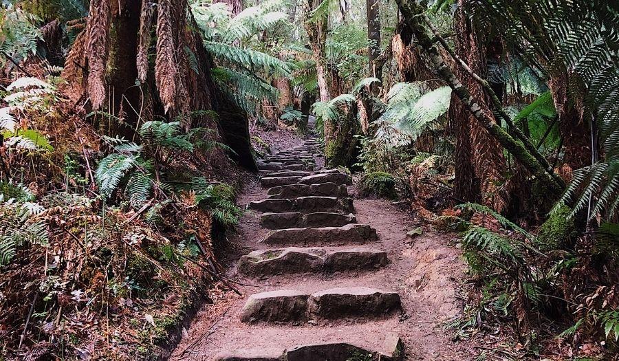 Mount Field National Park - Tasmania