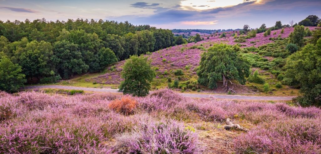 National Parks Netherlands