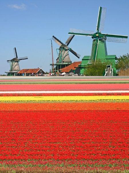 Spring Netherlands