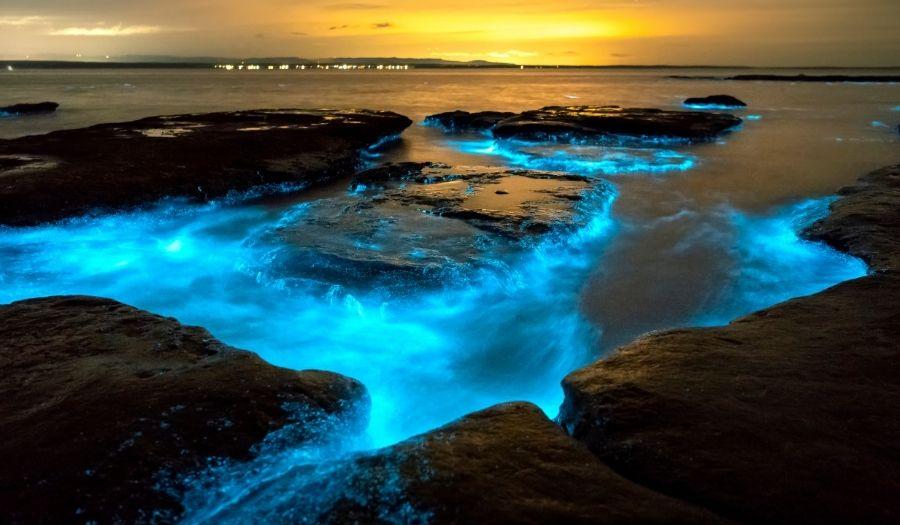 Tasmania - Bioluminescence