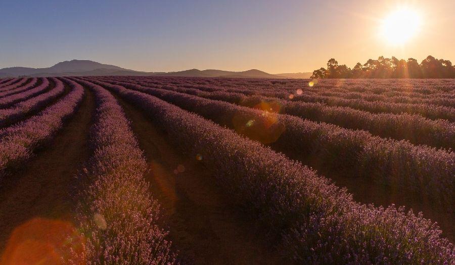 Tasmania - Bridestowe