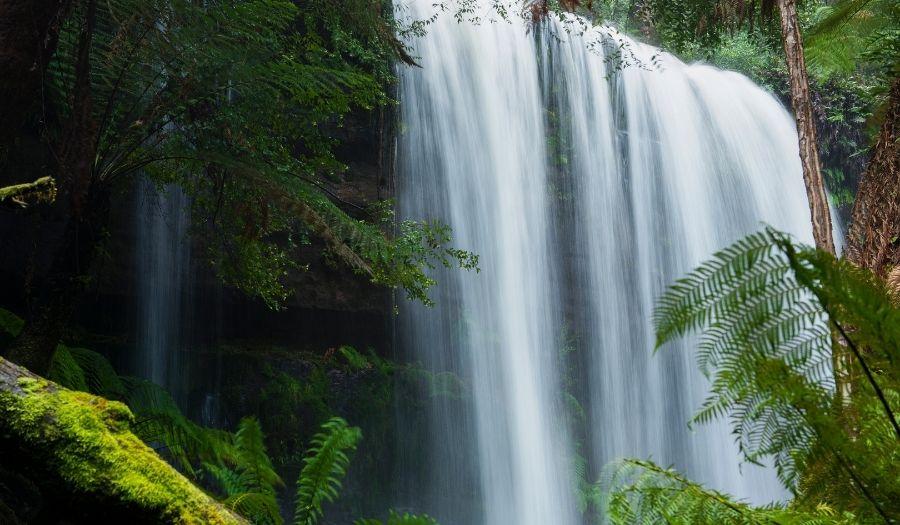 Tasmania - Mount Field National Park