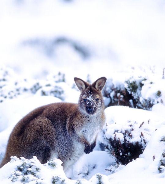 Tasmania in Winter