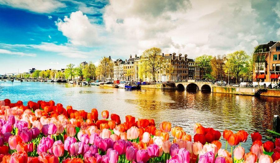 Tulips in Amsterdam city