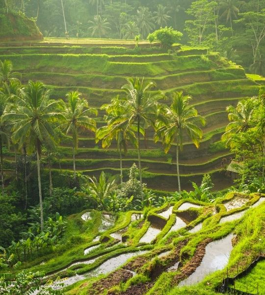 Ubud Places to Stay bali