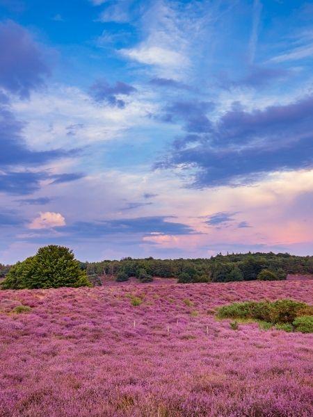 netherlands road trip - Veluwe