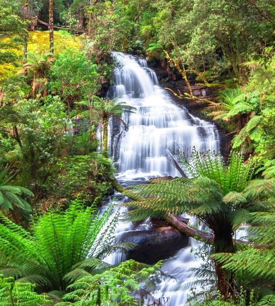 Otway Rainforest Waterfalls - Australia