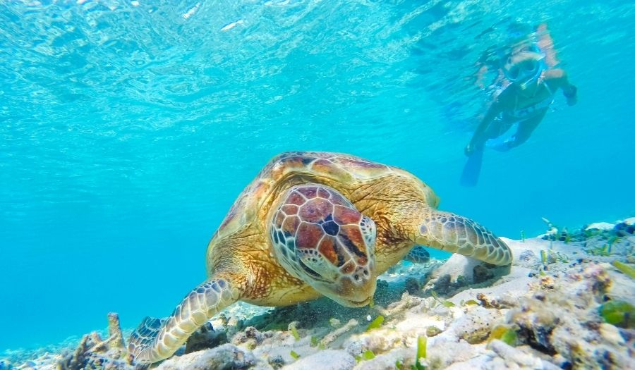 Snorkeling for beginners - Why